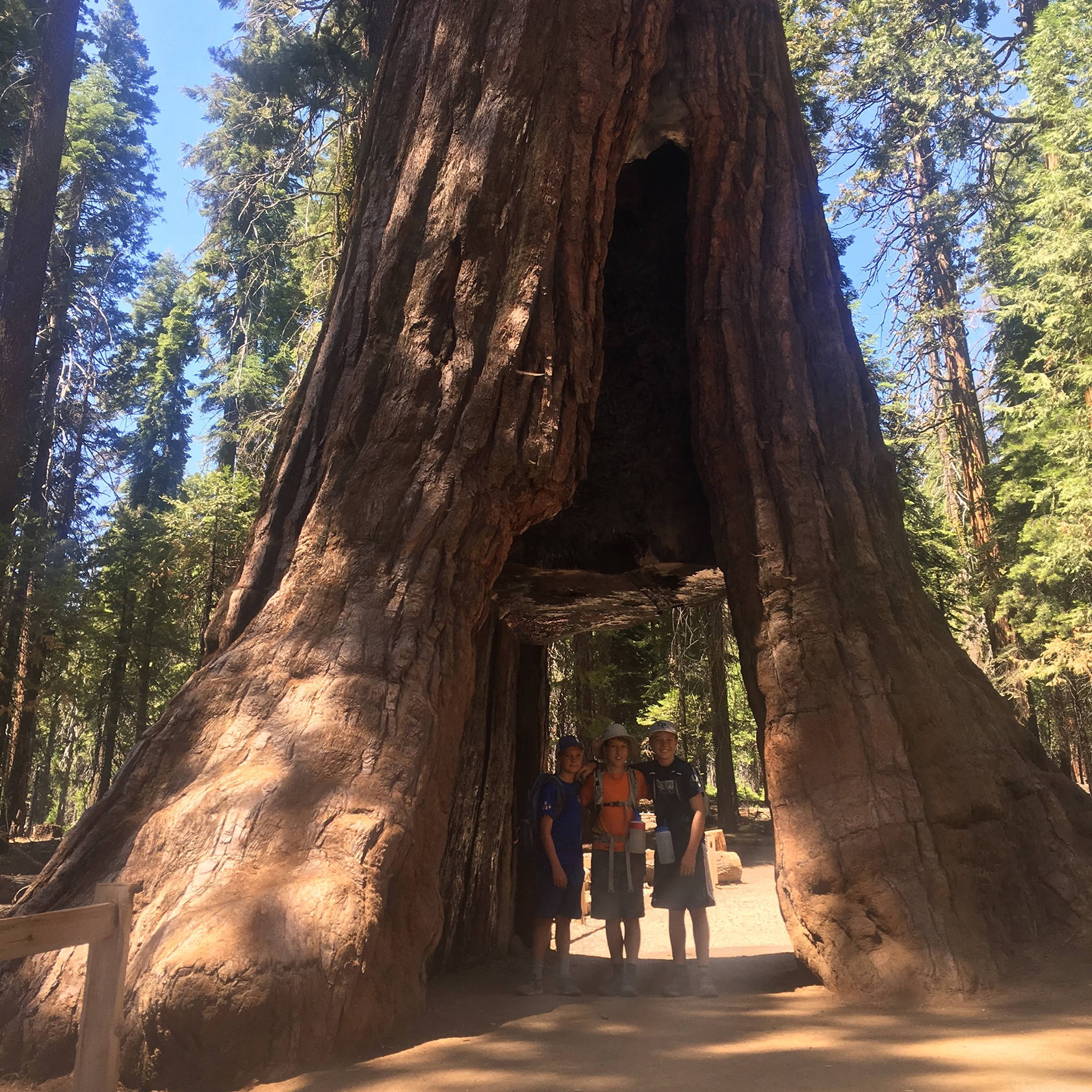 Travelers standing under a hollowed out trip tunnel on the California Discovery trip